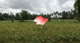 Land For Sale At Ubud Near To Hotel Area