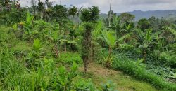 Land For Sale With Spectacular View At Payangan Ubud