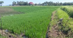 Land For Sale In Klecung Tabanan 1 Km To The Beach