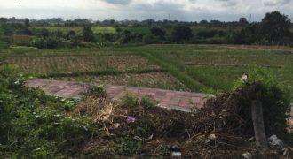 Green Belt View Land At Canggu Area