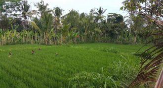 Quick sale Land At Payangan Ubud