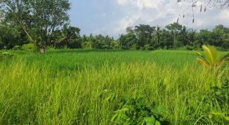 Land For Sale In Tabanan Suitable For Villa Retreat