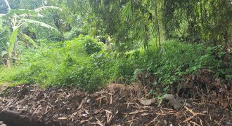 Land For Sale Only 10 Minutes to Kedungu Beach