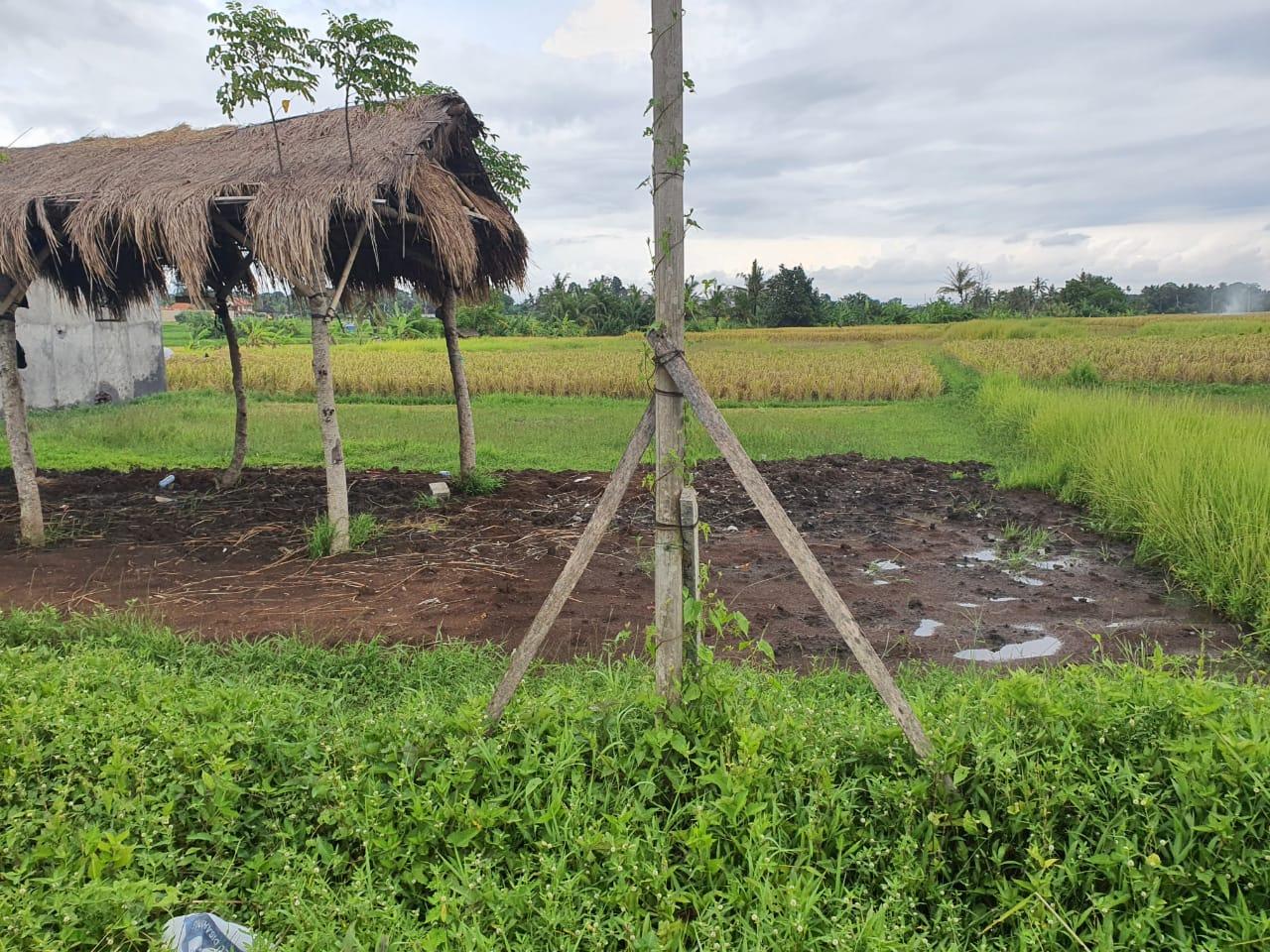 Few Plots For Sale In Kedungu Tabanan